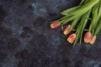 Tulips on darken concrete background