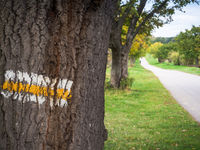 Markierung Wanderweg an einem Baum neben Waldweg