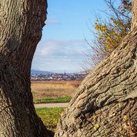 Blick auf Eisenstadt im Burgenland mit Nussbaum im Vordergrund