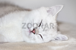 Close up young white cat sleeping