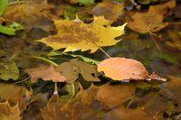 Herbstlaub im Wasser