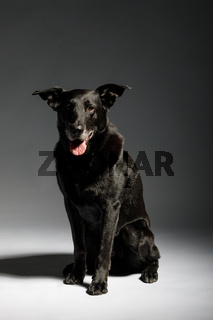 friendly and adorable crossbreed dog