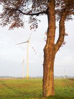 Windräder auf den Feldern mit Baum im Vordergrund