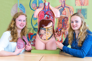 Two dutch students showing torso heart and lungs