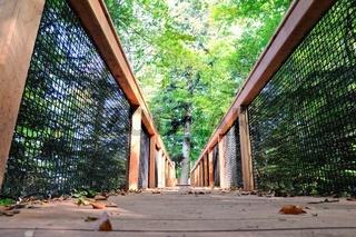 ueber die Holzbrücke in den Baumwipfel.jpg
