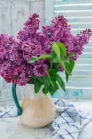 Bouquet of lilac in a pitcher by the window.
