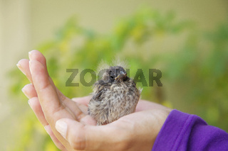 Little Bird Resting in the Girl's Hand