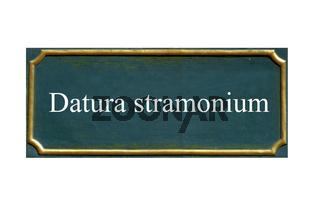 schild Stechapfel,Datura stramonium