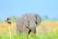 Vorbeiflug beim Elefanten