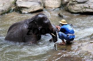 Elefant mit Mahut im Fluss