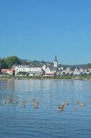 D--RP--Bad Breisig mit Rheinpromenade und Nilgänsen.jpg