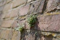 Überlebenskampf einer Pflanze