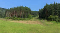 Dense forests in Altai Mountains in summer