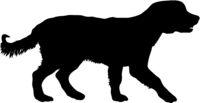 Spaniel dog silhouette on a white background
