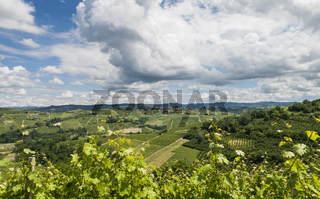 Vineyards of Castiglione Falletto, Barbaresco Piedmont