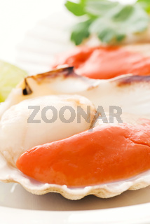 Raw scallop in a shell
