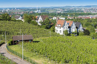 vineyard Stuttgart city