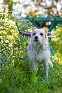 Terriermischling im Garten