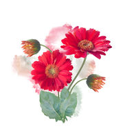 Gerbera Flowers watercolor
