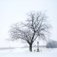 Linde bei Bildstock im Winter mit Schnee