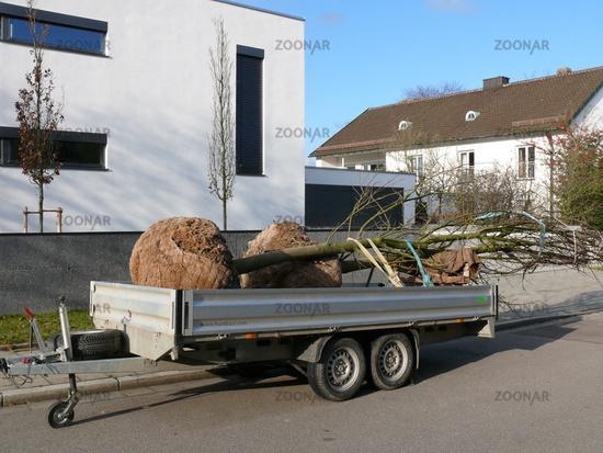Bäume Umpflanzen foto ballenware bäume umpflanzen transport bild 1017188