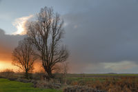 Bäume in der Abendstimmung
