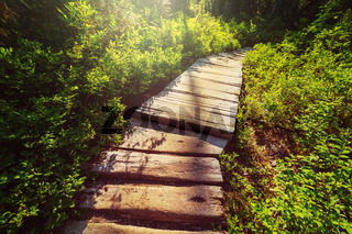 Boardwalk in the forest