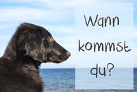 Dog, Ocean, Wann Kommst Du Means When Are You Coming
