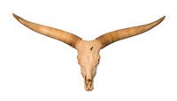 Skull with large antlers