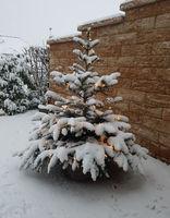 Weihnachtsbaum, Tannenbaum, Christbaum