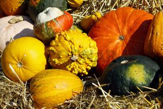 Kuerbisse im Herbst - Cucurbita