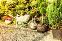 Wheelbarrow and sunlight outdoor