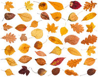 collage from various dried autumn fallen leaves