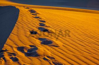 Sandy Desert in Mesquite Flat