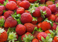 Background of beautiful and juicy strawberries with green leaves