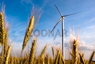 ein Windrad auf dem Feld