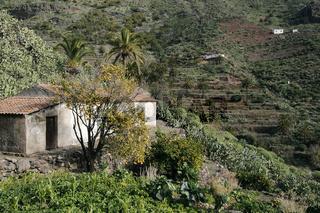 Orangen im Tal von Imada.
