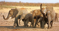 Gruppe Elefanten im Kruger Nationalpark Südafrika; african elephants with mud, south africa, wildlife