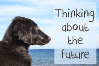 Dog At Ocean, Text Thinking About The Future