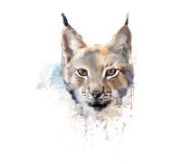 Watercolor lynx. wild cat.