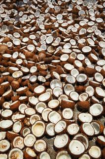 Drying coconuts, Kerala, South India