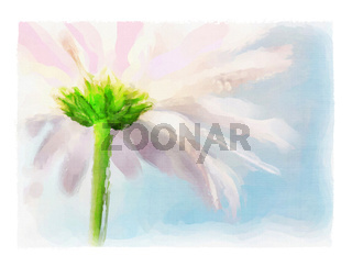Digital watercolor of pink daisy
