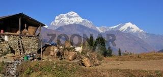 Rural scene in Nepal