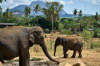 Elephants in national park