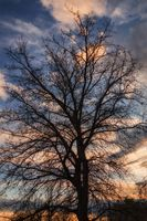 Tree Under A Colorful Sunset