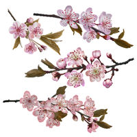 Sakura flowers background