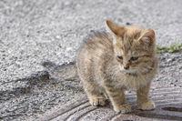 Kätzchen sonnt sich auf Fels
