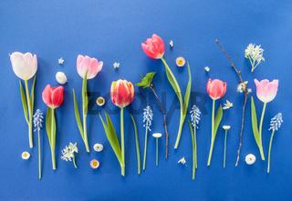 Bunte Fruehlingsblumen auf Blau