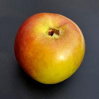 Coulon Renette, Alte Apfelsorten, Apfel, Malus, domestica