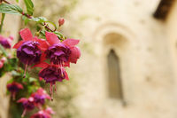 Flower with church in background